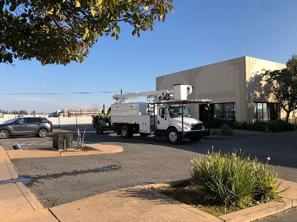 Commercial Tree Services in Sacramento, CA