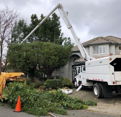 Expert Residential Arborists in Sacramento